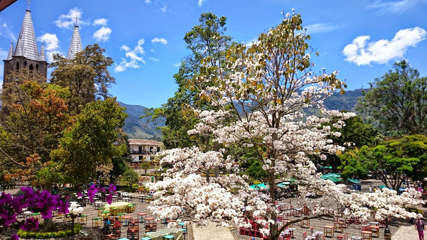 El guayacan blanco jardin antioquia for Antioquia jardin