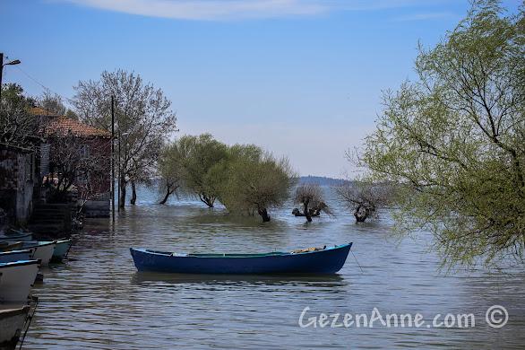 Uluabat gölü kıyısındaki Gölyazı'da baharda suyun içinde kalmış ağaçlar, Bursa