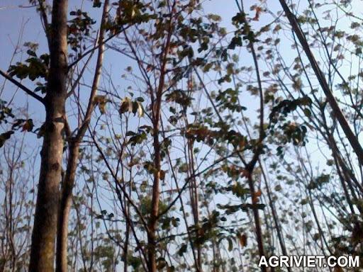 Agriviet.Com-Photo0858.jpg