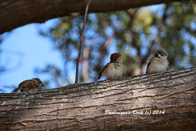 3 sparrows on the branch