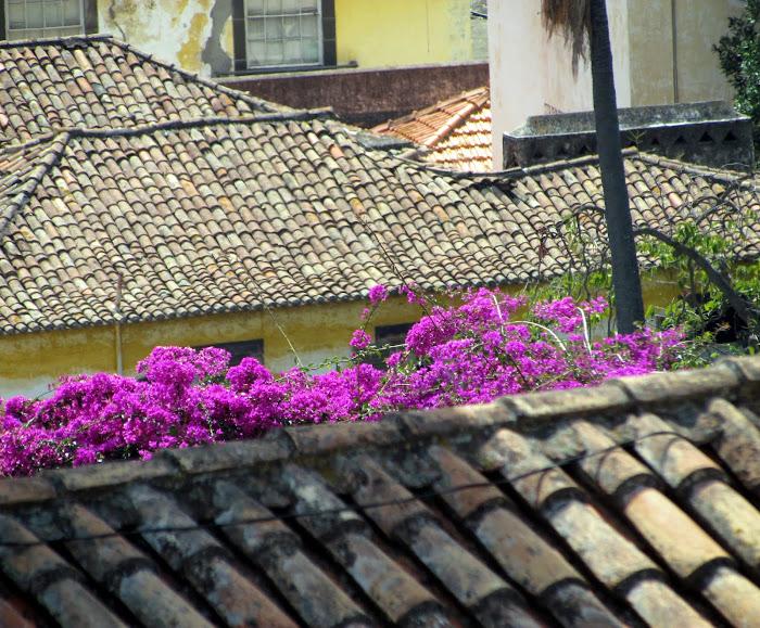 flowers between old roofs