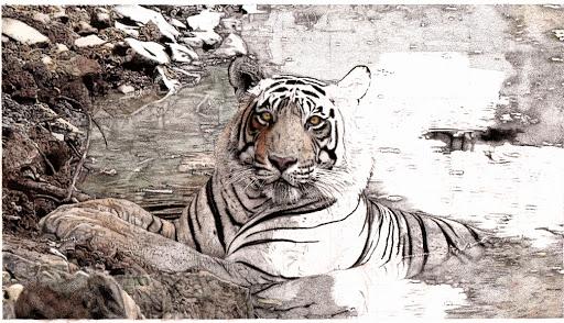 tigerupdate-2015-03-24-17-35.jpg