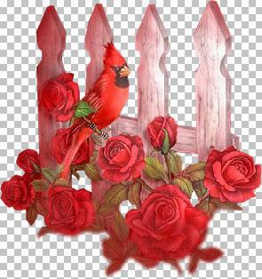 cardinal1--tube--3.jpg