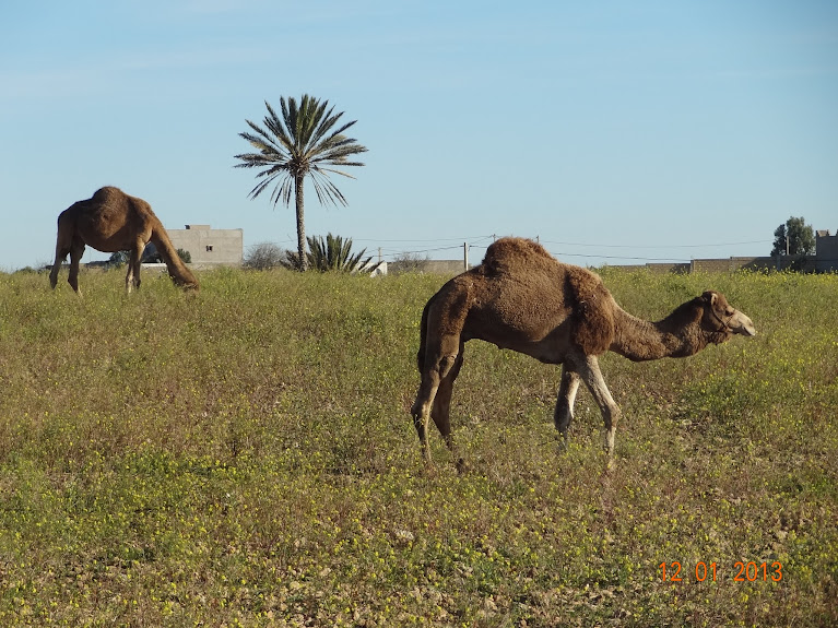 marrocos - Marrocos e Mauritãnia a Queimar Pneu e Gasolina - Página 2 DSC05495
