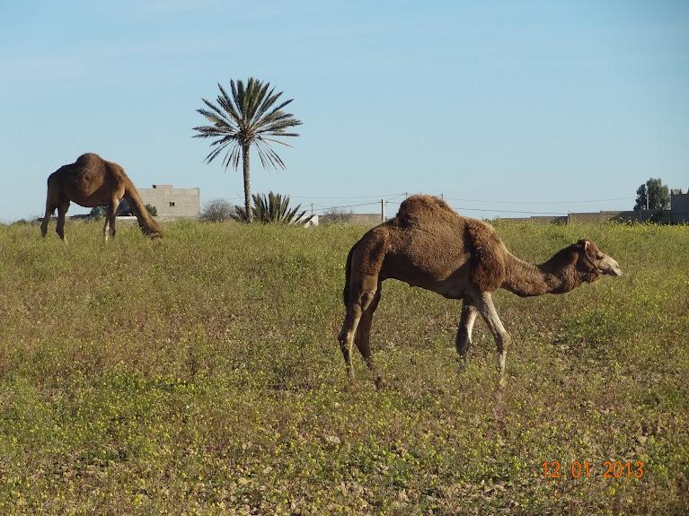 Marrocos e Mauritãnia a Queimar Pneu e Gasolina - Página 2 DSC05495