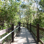 Yuelarbah tree top board walk (338413)