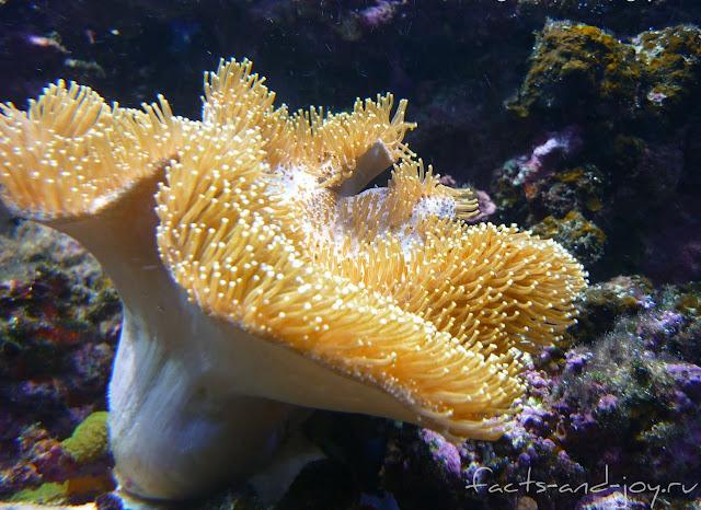 кораллы новосибирского зоопарка