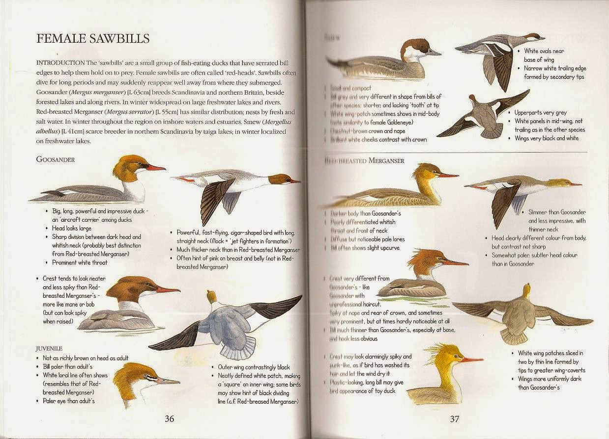 Avian Behavior Guide  Tailfeathers  Bird Information