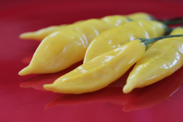 bright yellow peppers on a red plate