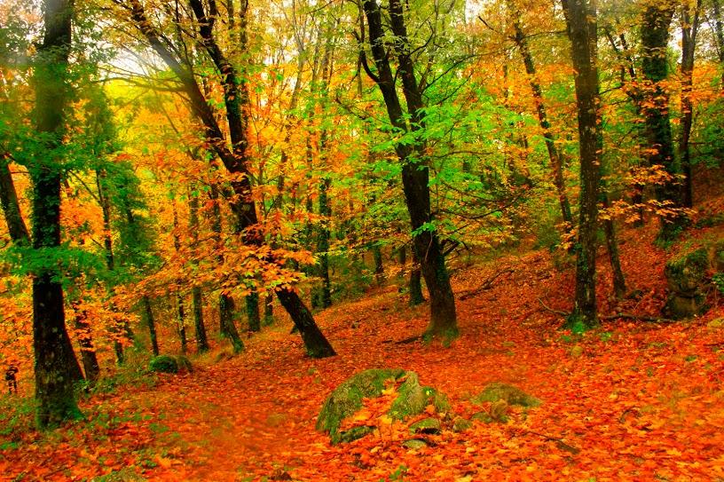 Vento em Outono
