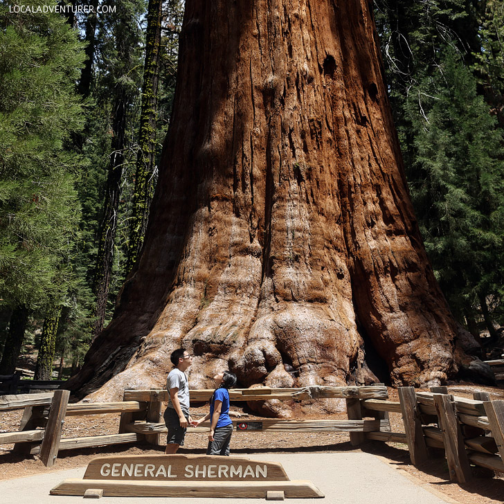 General Sherman Tree (11 Most Amazing Trees to Put On Your Bucket List).