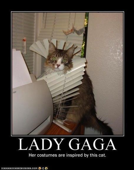 photo of a cat tangled in a window blind: inspires lady gaga's costumes
