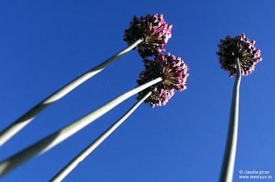 plante din zone mlastinoase
