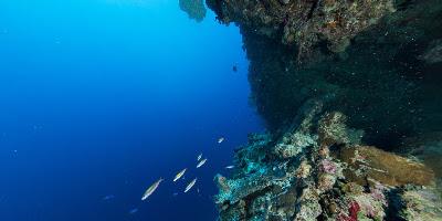 Hatohobei, Palau