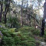 Ferns on the descent to Glenworth Valley (159466)