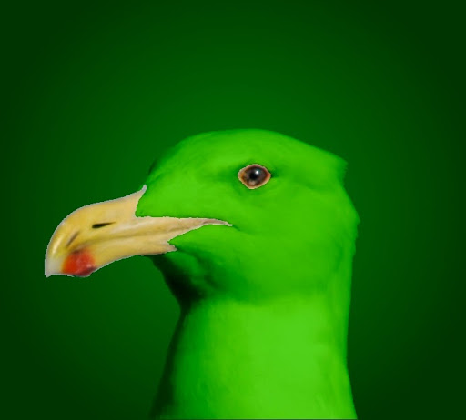 Green Seagull