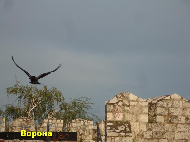 ворона - оттенки черного цвета