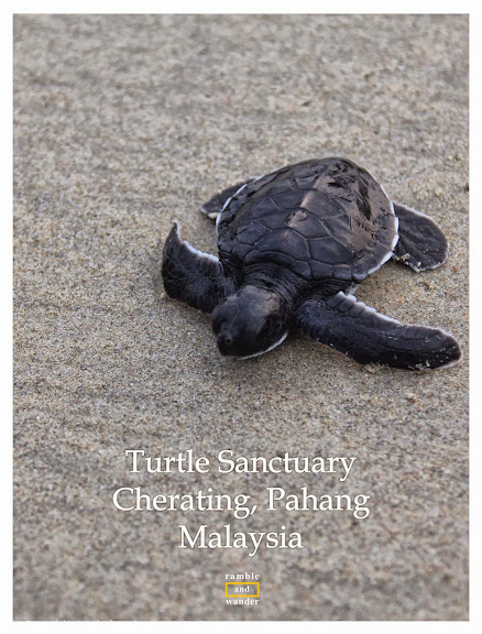 Turtle Sanctuary in Cherating, Pahang, Malaysia | www.rambleandwander.com