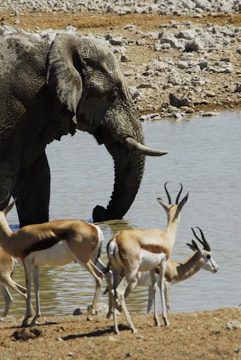 أفضل ما في أفريقيا  Best of Africa Namibia_180807114948