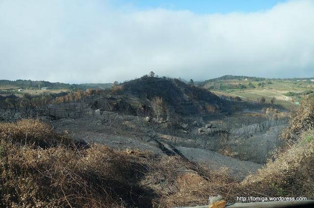 Przygnębiający krajobraz po ostatnich pożarach na wyspie