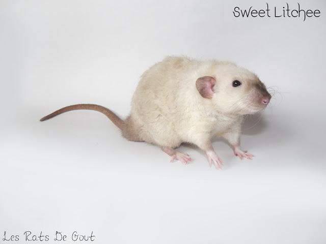 Sweet litchee