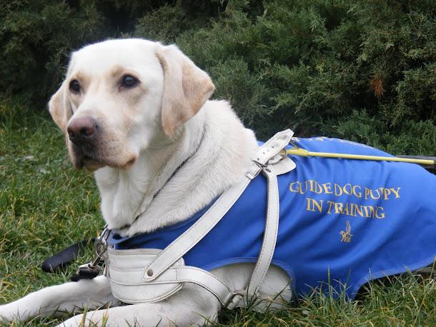 Razvan Anton - Light into Europe, guide dogs