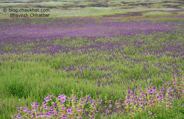 Kas Plateau Flower Bed Header Photo