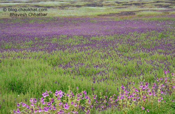 Kas Plateau Flower Bed Header Photo