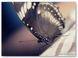 Butterfly inside Ceres bus