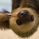 thy_sloth