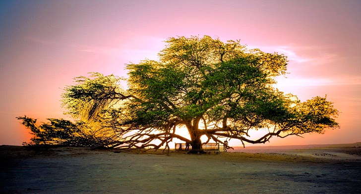 The Tree of Life Bahrain (11 Fascinating and Unique Trees to Put On Your Bucket List).