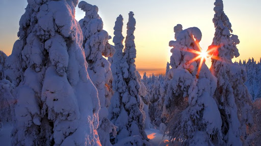 Snow-Covered Forest, Finland.jpg
