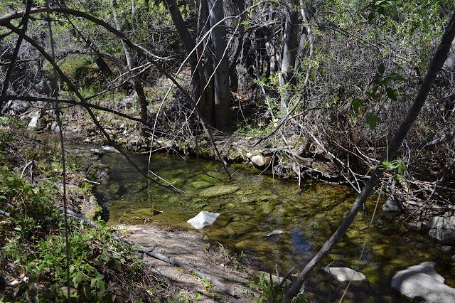 slow section of Tule Creek