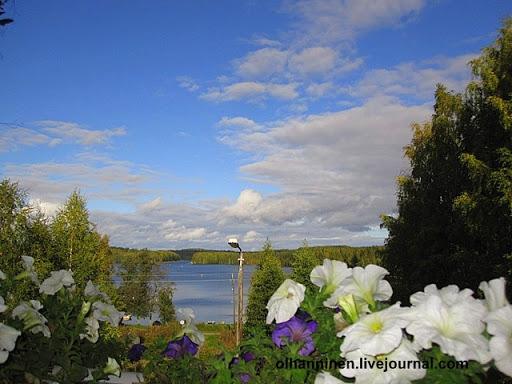 В Финляндии петуньи при хорошем уходе могут стоять до заморозков