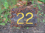 Ladybugs on a Trail Marker
