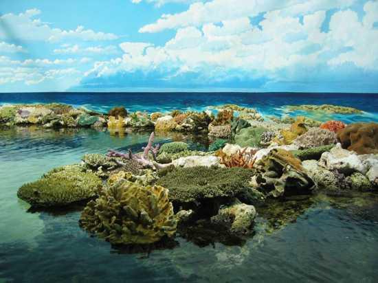 عجائب الدنيا السبع الطبيعية Great-barrier-reef-dive-with-big-fish
