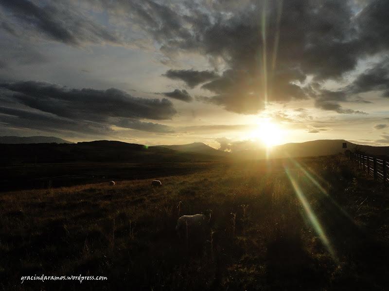 - Passeando até à Escócia! - Página 15 DSC03925