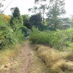 Grassy track to Lapstone Pl (146649)
