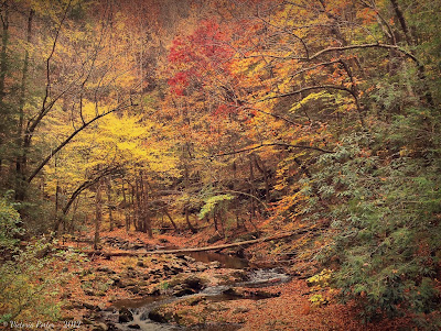 Smoky Mountain Tennessee; iPhone fall scene