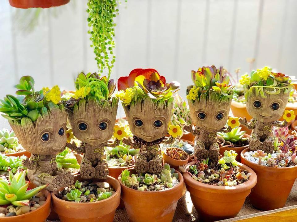 Succulents in Baby Groot containers
