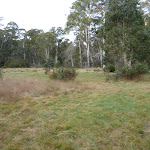 Plenty of space to roam at Clover Flat camping area