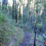 Grose River Track (50954)