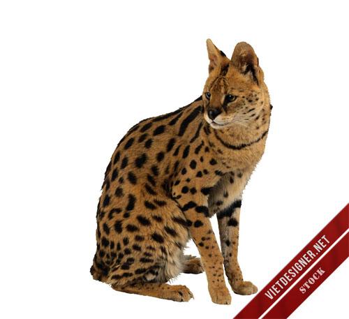 Bộ 120 stock động vật hoang dã chất lượng cao