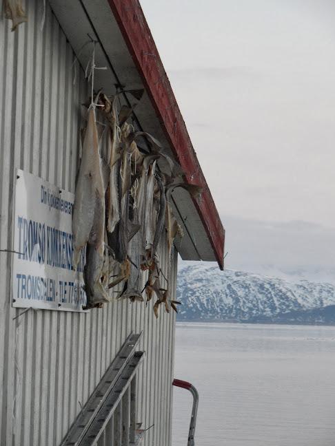Norvège mars 2014 SAM_1173