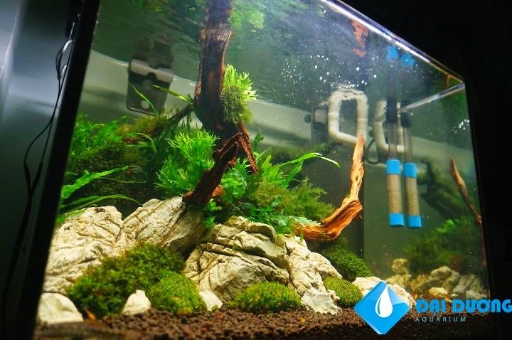 làm một bể thủy sinh nuôi tép đơn giản 8