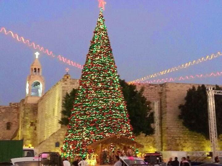 Israel: rabbincal authority legalizes Christmas trees