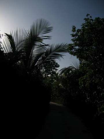 Boundary Palms in fading daylight