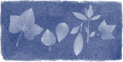 Google-Doodle: 216. Geburtstag von Anna Atkins