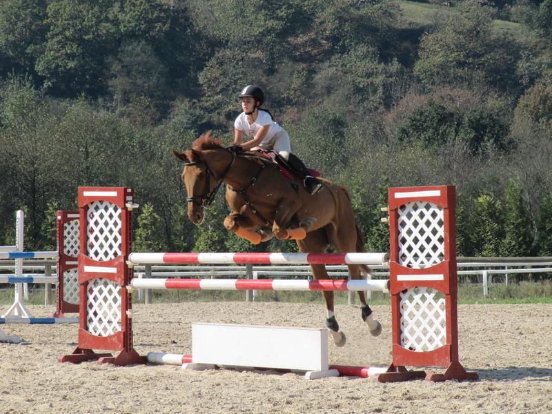 Ganador aevtmax -  Titulo : Salto hípico