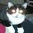 Paul Freeland avatar image
